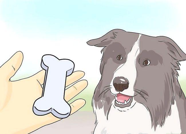Beeld getiteld Stel nuwe hond vir jou huis en ander honde in Stap 29