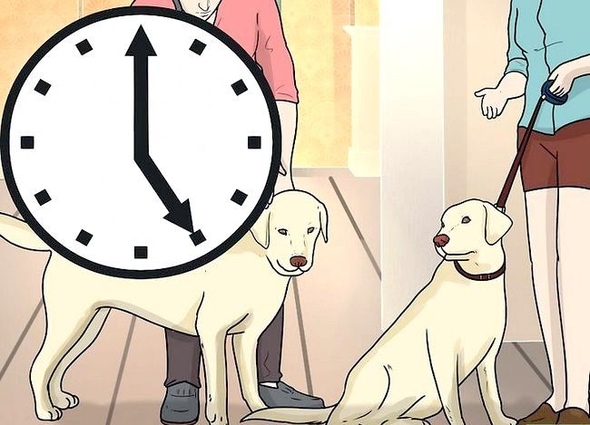 Beeld getiteld Stel `n nuwe hond vir jou huis en ander honde in. Stap 32