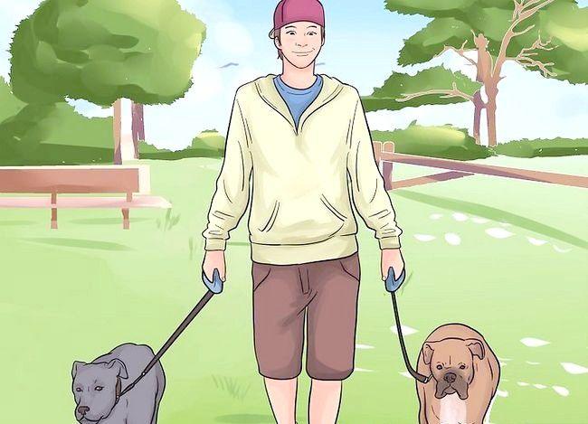 Beeld getiteld Stel nuwe hond vir jou huis en ander honde in. Stap 33