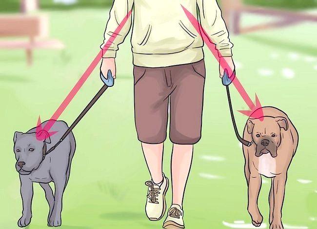 Beeld getiteld Stel nuwe hond vir jou huis en ander honde in. Stap 34
