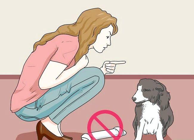 Beeld getiteld Stel nuwe hond vir jou huis en ander honde in. Stap 35