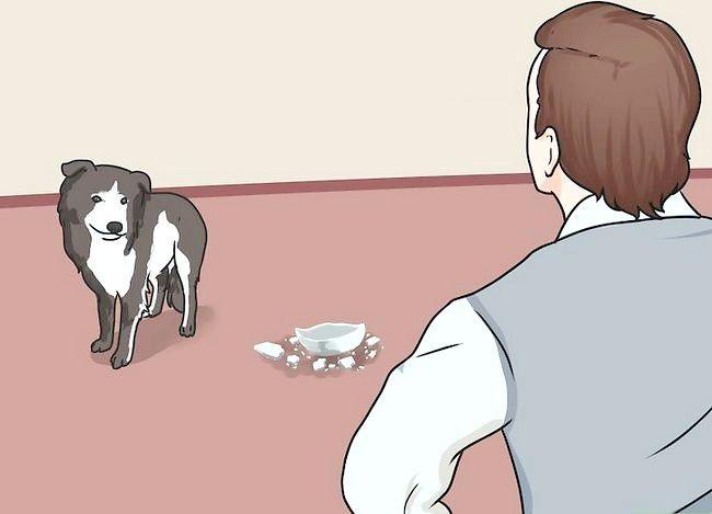 Beeld getiteld Stel nuwe hond vir jou huis en ander honde in. Stap 36