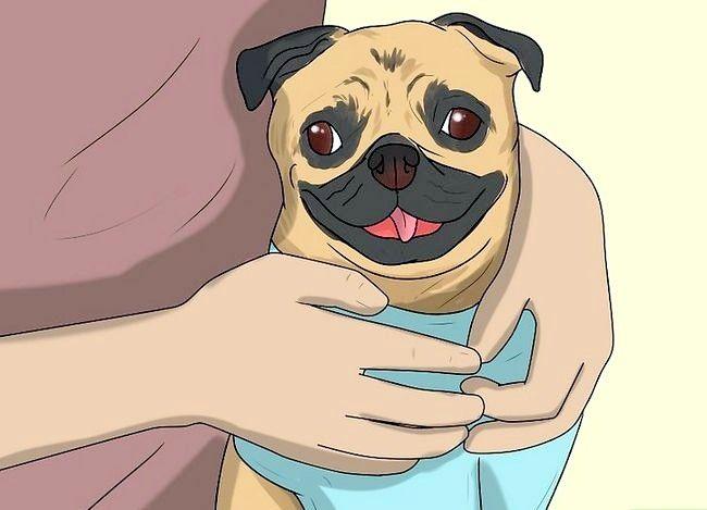 Beeld getiteld Stel nuwe hond vir jou huis en ander honde in Stap 5
