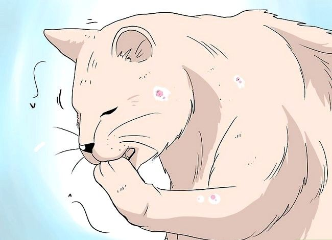 Prent getiteld Deal with Hair Loss in Cats Step 1