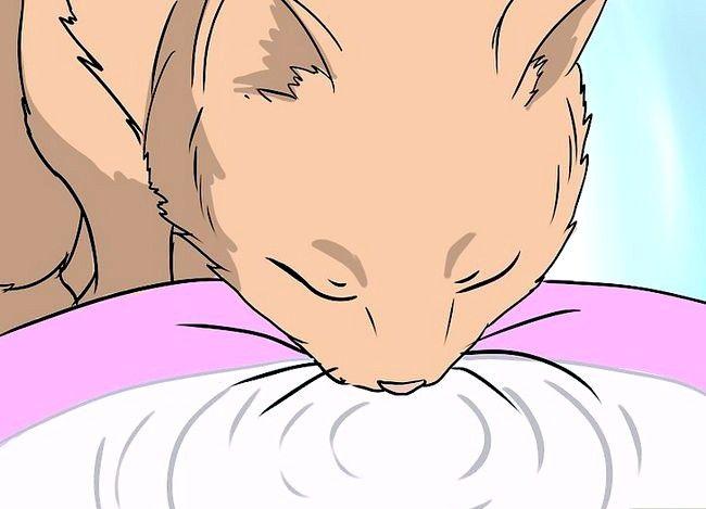 Prent getiteld Handeverlies in Katte Stap 12