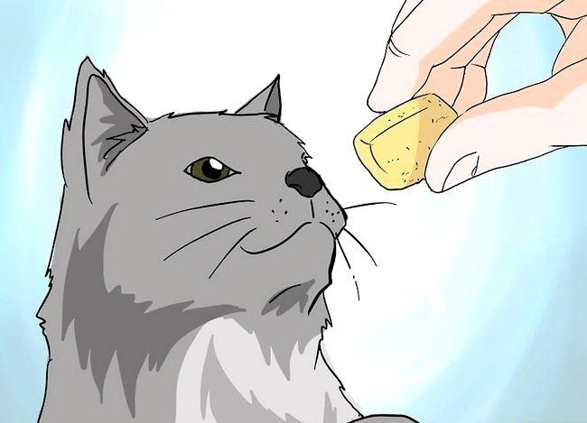 Prent getiteld Handeverlies in Katte Stap 18