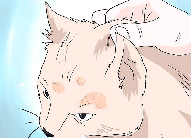 Prent getiteld Deal with Hair Loss in Cats Stap 5
