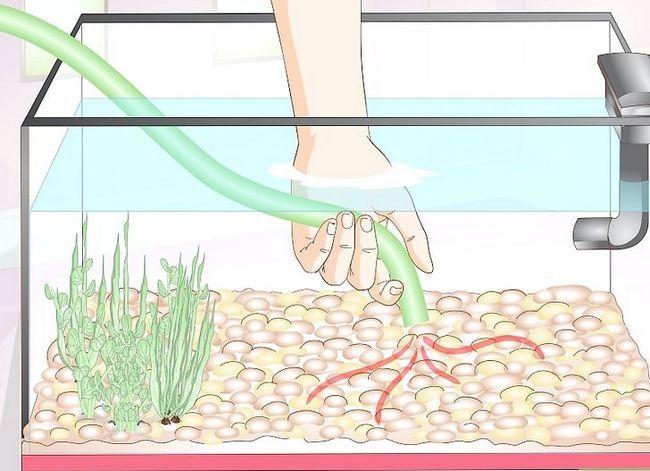 Prent getiteld Skoon Aquarium Decorations Stap 3