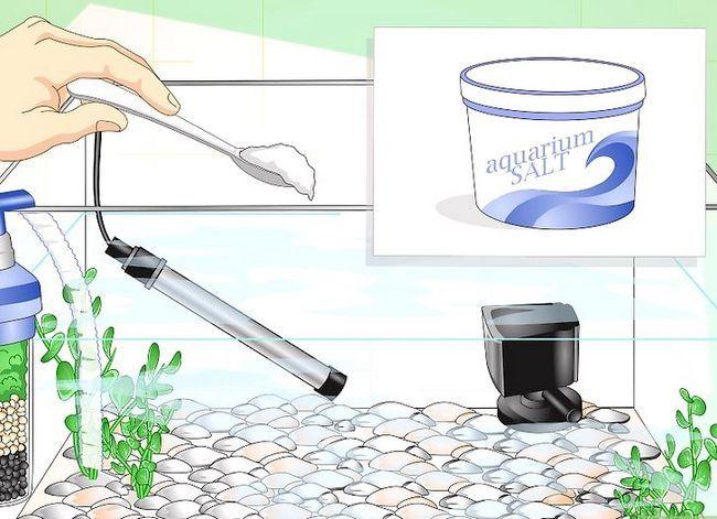 Prent getiteld Fix Cloudy Aquarium Water Stap 17