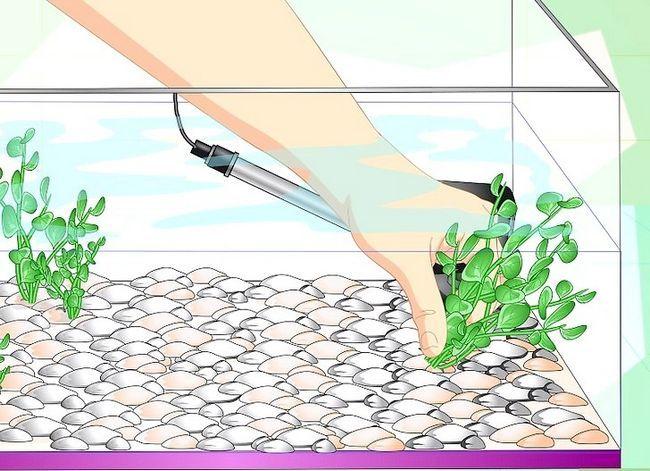 Prent getiteld Fix Cloudy Aquarium Water Stap 9