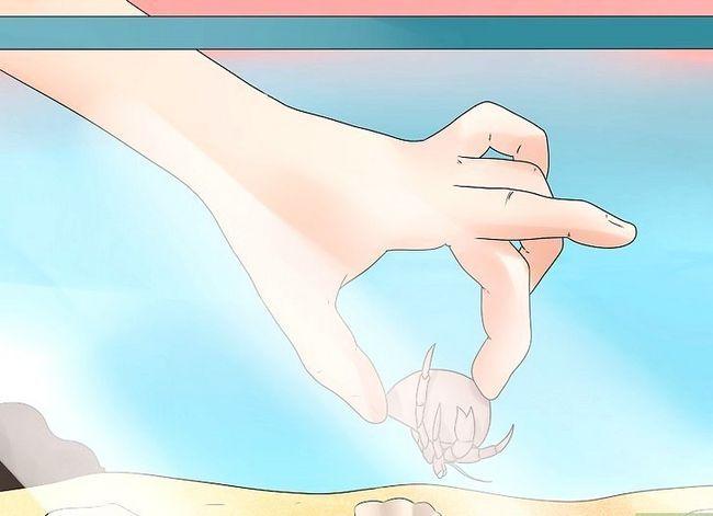 Prent getiteld Reinig `n Hermit Crab Tenk Stap 12