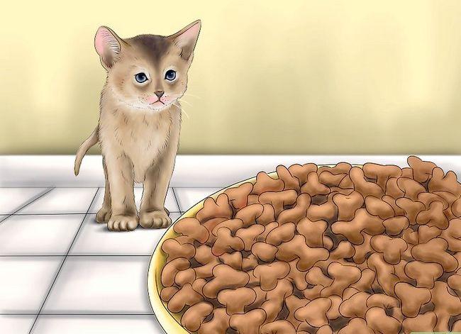 Prent getiteld Hou katte uit jou tuin Stap 6