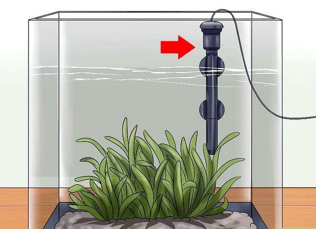 Prent getiteld Hou `n Betta`s Water Warm Step 1