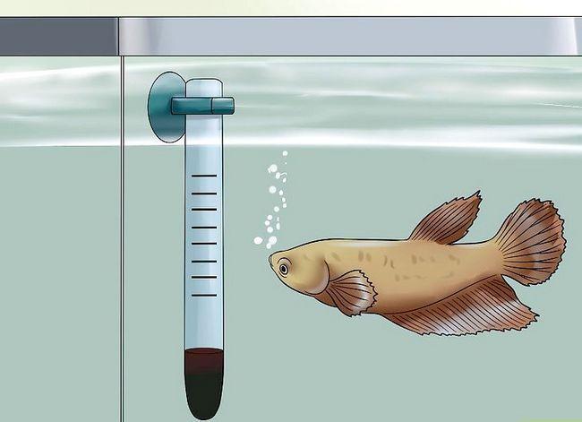 Prent getiteld Hou `n Betta`s Water Warm Step 2