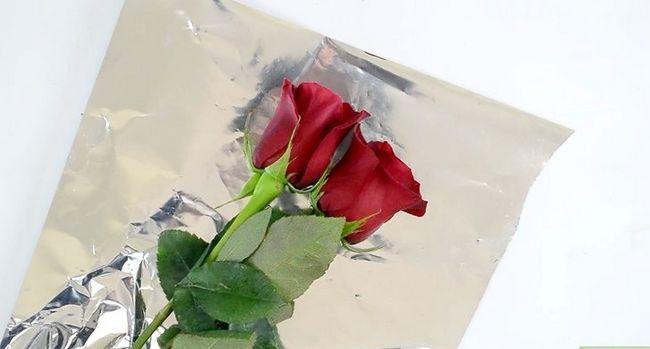 Prent getiteld Hou rose vars stap 1
