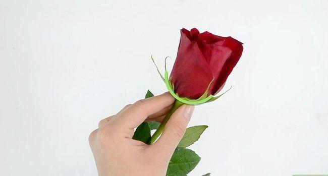 Prent getiteld Hou rose vars stap 3