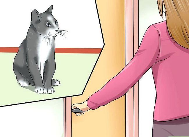 Prent getiteld Hou `n kat kalm tydens vuurwerk Stap 1