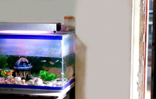 Prent getiteld Hou `n Goldfish Alive Stap 5