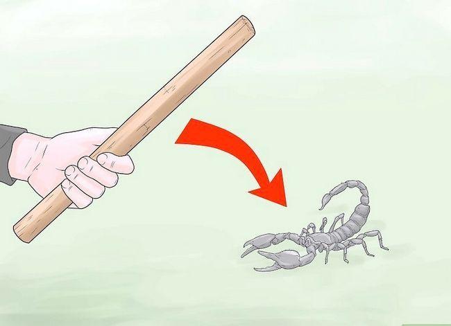 Prent getiteld Kill a Scorpion Stap 3