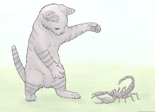 Prent getiteld Kill a Scorpion Stap 6
