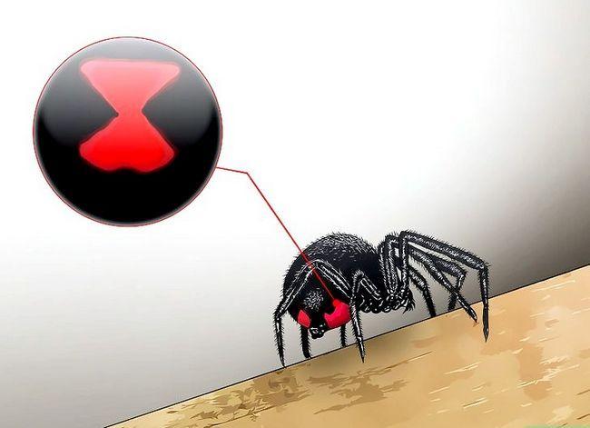 Prent getiteld Kill a Venomous Spider Stap 1