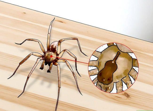Prent getiteld Kill a Venomous Spider Stap 2