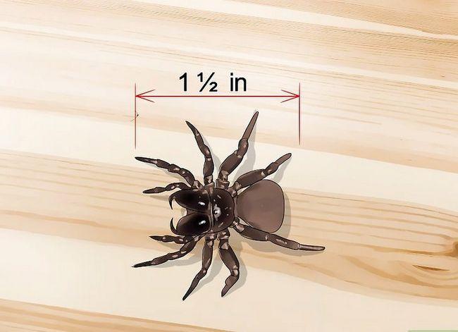 Prent getiteld Kill a Venomous Spider Stap 3
