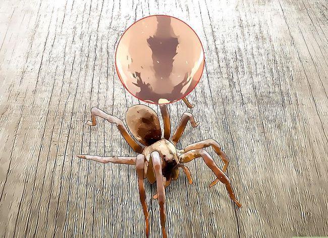 Prent getiteld Kill a Venomous Spider Stap 4
