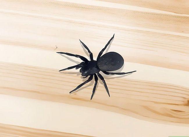 Prent getiteld Kill a Venomous Spider Stap 5