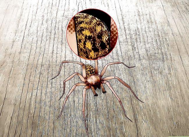 Prent getiteld Kill a Venomous Spider Stap 6