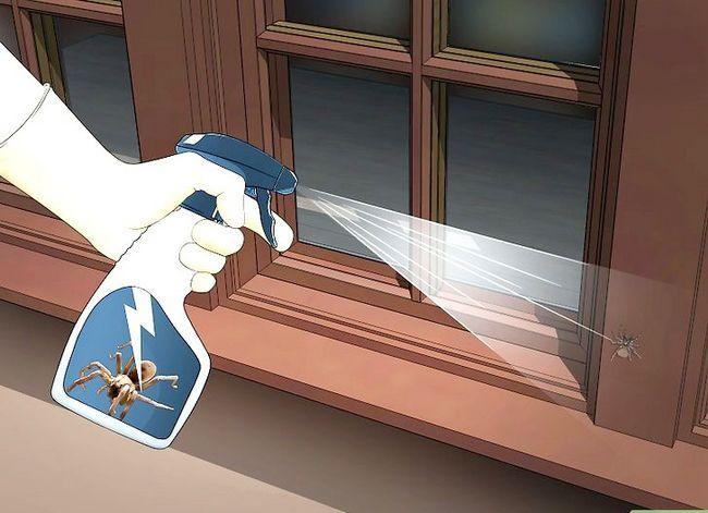 Prent getiteld Kill a Venomous Spider Stap 7