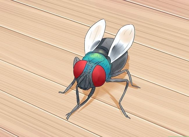 Prent getiteld Kill a Fly Stap 1