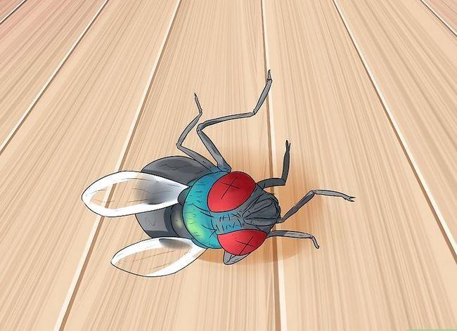 Prent getiteld Kill a Fly Stap 12