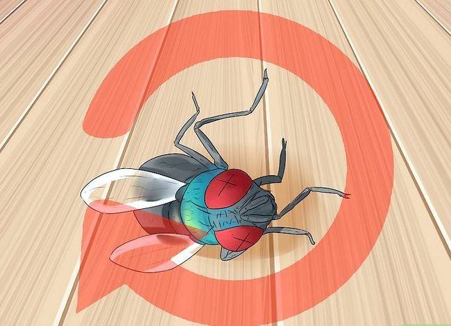 Prent getiteld Kill a Fly Stap 13