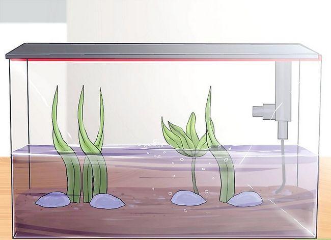Prent getiteld Stel `n akwarium op met lewende plante Stap 11