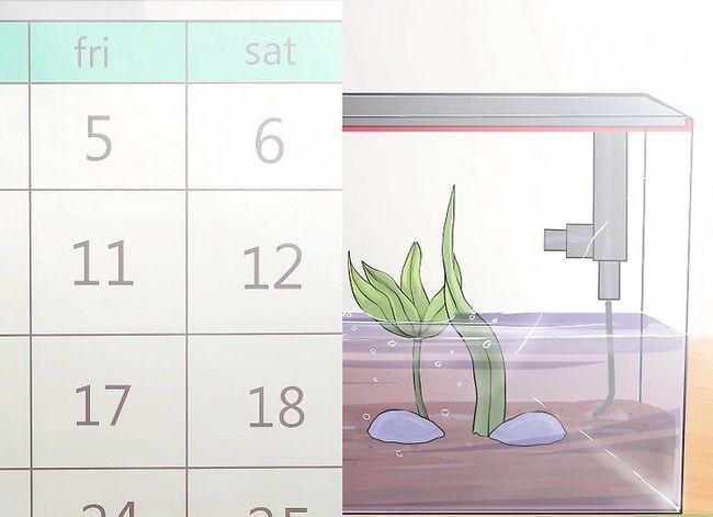 Prent getiteld Stel `n akwarium met lewende plante op Stap 12