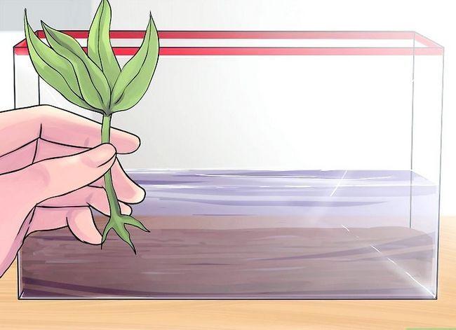 Prent getiteld Stel `n akwarium op met lewende plante Stap 6