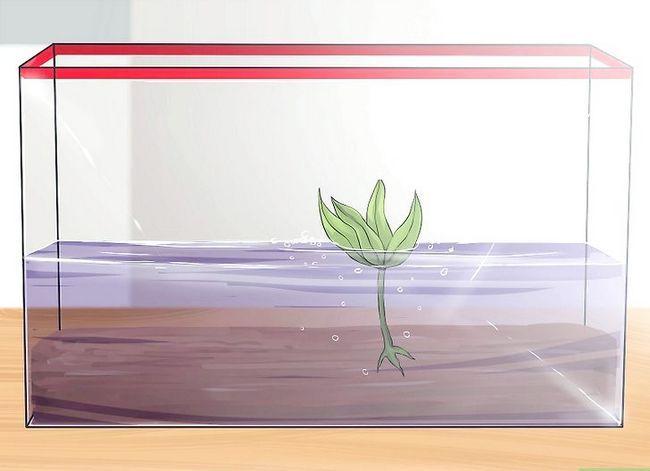 Prent getiteld Stel `n akwarium op met lewende plante Stap 7