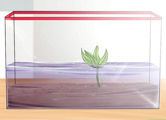 Prent getiteld Stel `n akwarium op met lewende plante Stap 8