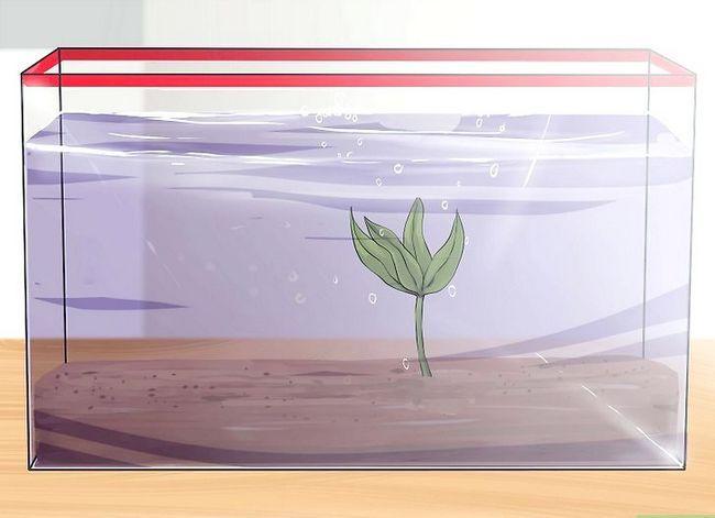 Prent getiteld Stel `n akwarium op met lewende plante Stap 9