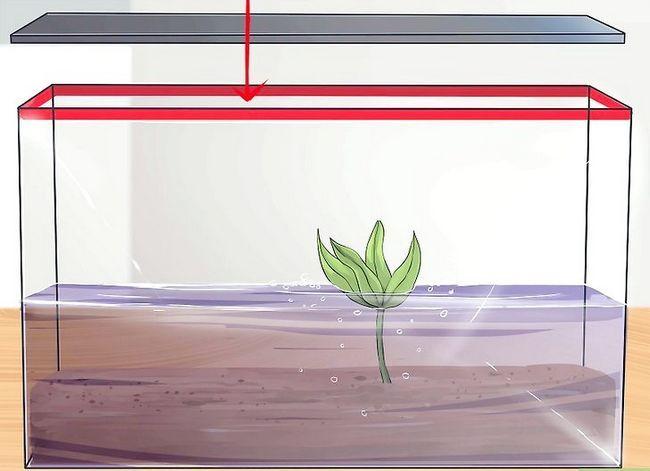 Prent getiteld Stel `n akwarium met lewende plante op. Stap 10