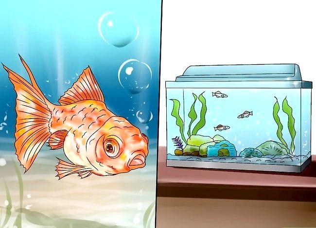 Prent getiteld Beplan `n akwarium Stap 3