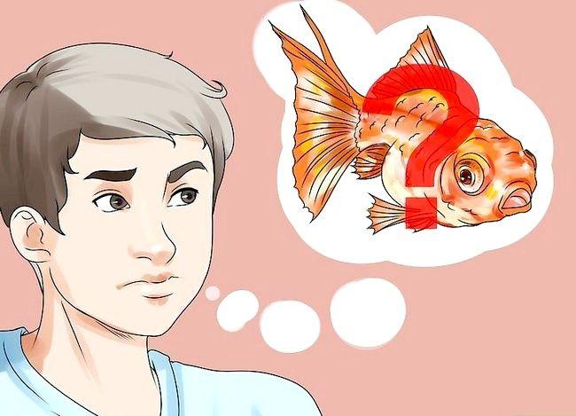 Prent getiteld Beplan `n akwarium Stap 4