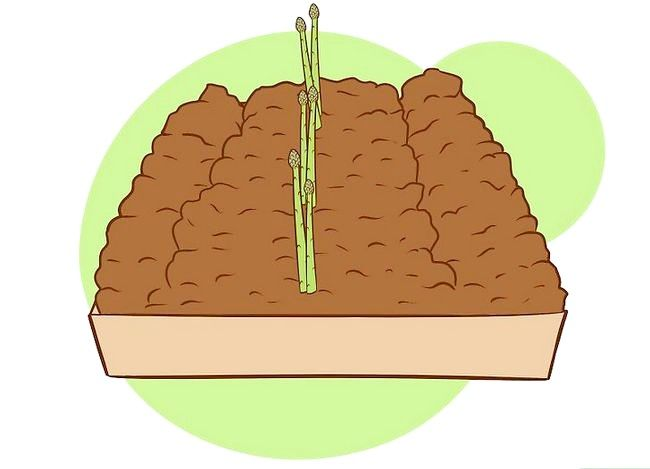 Prent getiteld Plant Aspersies Stap 21