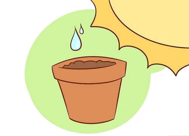 Prent getiteld Plant Aspersies Stap 6
