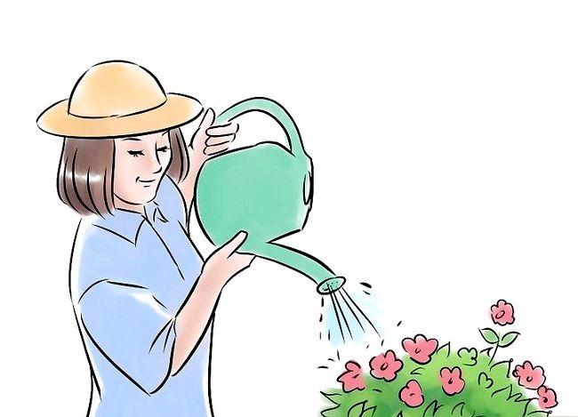 Prent getiteld Plant a Garden Stap 6