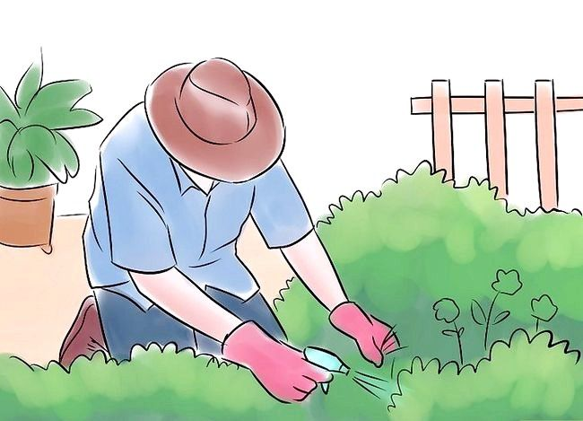 Prent getiteld Plant `n tuin Stap 9