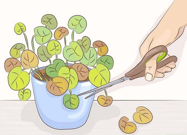 Prentjie Prune Huisplante Stap 3