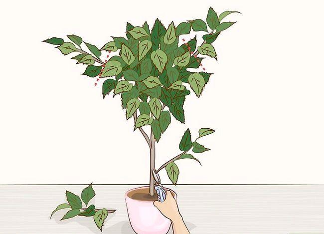 Prentjie Prune Huisplante Stap 5
