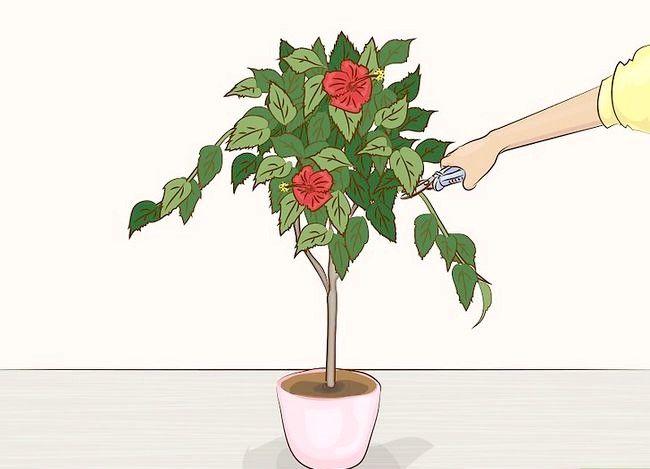 Prentjie Prune Huisplante Stap 6